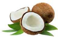 coconut png free download 26