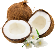 coconut png free download 27