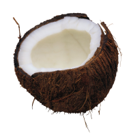 coconut png free download 28