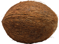 coconut png free download 4