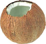 coconut png free download 5