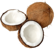 coconut png free download 6
