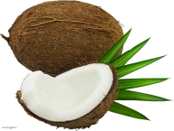 coconut png free download 8