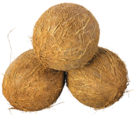 coconut png free download 9