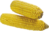 corn png free download 12