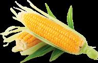 corn png free download 14