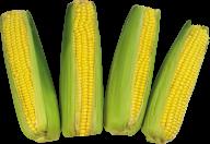 corn png free download 16