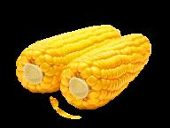 corn png free download 22