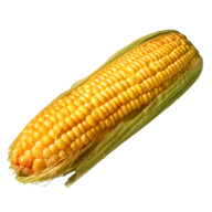corn png free download 24