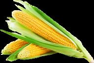 corn png free download 25