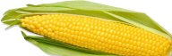 corn png free download 26