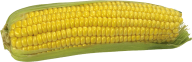 corn png free download 27
