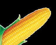 corn png free download 28