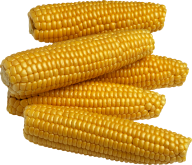 corn png free download 29