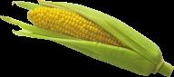 corn png free download 3