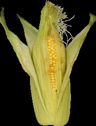 corn png free download 30