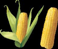 corn png free download 32
