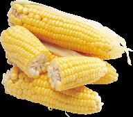 corn png free download 34