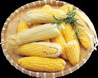corn png free download 38