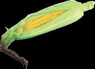 corn png free download 4