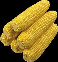 corn png free download 5