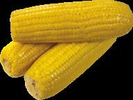 corn png free download 6