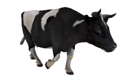 Cow Walking Png