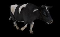 Cow Walking Png