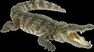 Crocodile Png Angry