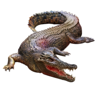 Crocodile Png clipart
