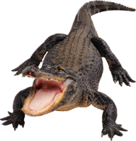 Crocodile Png Eating