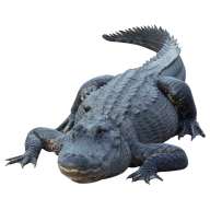 Crocodile  Png for Web