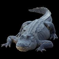 Crocodile  Png for Web