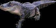 Crocodile Side View Png