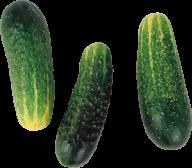 cucumber png free download 30