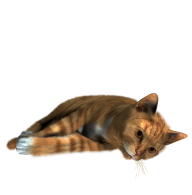 Cute Cat Sleeping Png