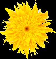 dandelion png free download 1