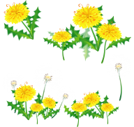 dandelion png free download 29