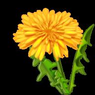 dandelion png free download 30