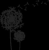 dandelion png free download 8