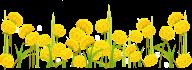 dandelion png free download 9