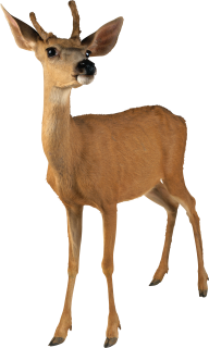 Deer Doll Png