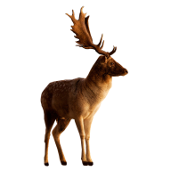 Deer Png For Web