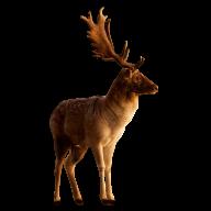 Deer Png For Web