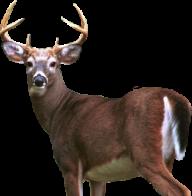 Deer Png Half Size