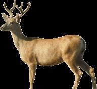 Deer Png Side View