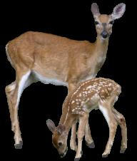 Deer With Cubs Png