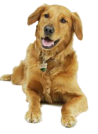 Dog Clipart Brown