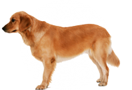 Dog Free Png Image