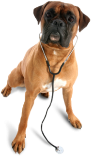 Dog In Chain Png